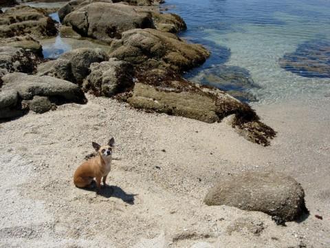 Thor at beach