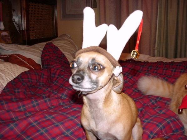Thor as reindeer